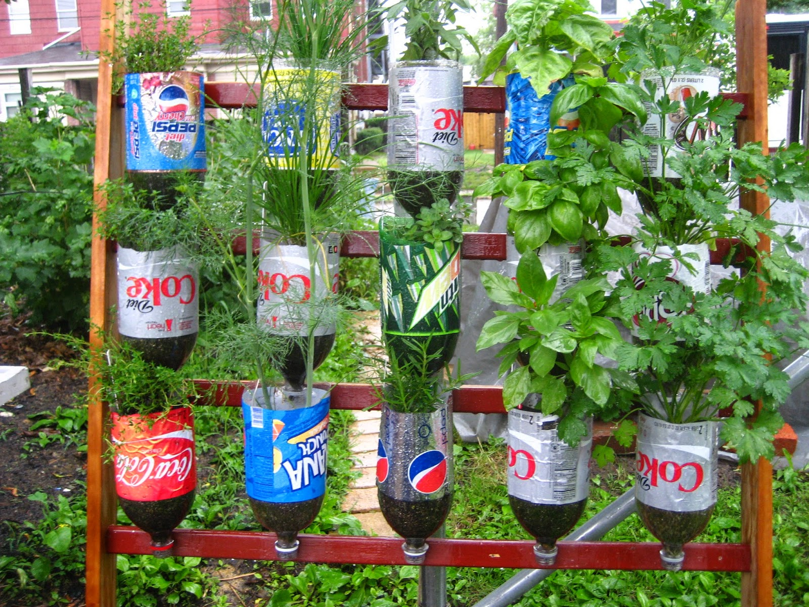 Plastic bottles recycled as planters on a wall